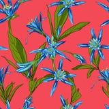 Вручите вычерченные лилии цветков на белой предпосылке безшовной Стоковое Изображение RF
