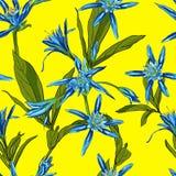 Вручите вычерченные лилии цветков на белой предпосылке безшовной Стоковая Фотография RF