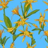 Вручите вычерченные лилии цветков на белой предпосылке безшовной Стоковое фото RF