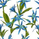 Вручите вычерченные лилии цветков на белой предпосылке безшовной Стоковые Изображения RF
