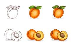 Вручите вычерченные цвет и эскиз, вкусный абрикос Стоковое фото RF