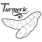 Вручите вычерченный корень турмерина, пряный ингридиент, логотип турмерина, здоровые натуральные продукты, турмерин специи изолир Стоковая Фотография