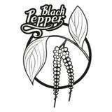 Вручите вычерченный черный перец, пряный ингридиент, логотип черного перца, здоровые натуральные продукты, spice черный перец на  иллюстрация вектора
