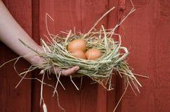 Вручите гнездо владением с яичками на деревянной предпосылке стены Стоковое Фото
