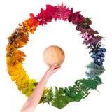 Вручите держать деревянный шар над красочным осенним кругом сделанным из листьев Стоковая Фотография RF
