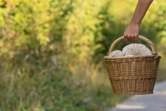 Вручите держать корзину полный грибов и запачканной зеленой предпосылки Стоковые Фото