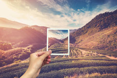 Вручите держать немедленное фото и осмотрите восход солнца поля чая Стоковые Изображения