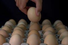 Вручите держать яичко с де-фокусом яичек в бумажном подносе, из foc Стоковое фото RF