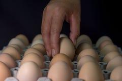 Вручите держать яичко с де-фокусом яичек в бумажном подносе, из foc Стоковое Фото