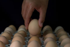 Вручите держать яичко с де-фокусом яичек в бумажном подносе, из foc Стоковые Фотографии RF