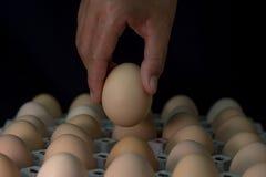 Вручите держать яичко с де-фокусом яичек в бумажном подносе, из foc Стоковые Фото