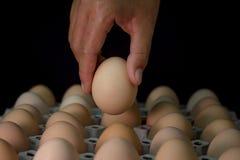 Вручите держать яичко с де-фокусом яичек в бумажном подносе, из foc Стоковые Изображения