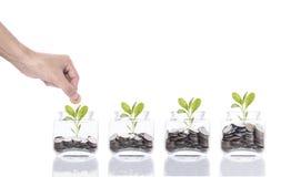 Вручите концепцию денег сбережений, руку дела кладя дерево стога монетки денег растущее на копилку Стоковые Фото