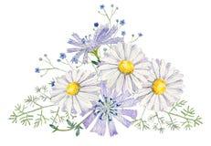 Вручите покрашенный шаблон clipart модель-макета акварели полевых цветков бесплатная иллюстрация