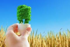 Вручите электрическую лампочку eco удерживания на сухой предпосылке сена Стоковые Фотографии RF