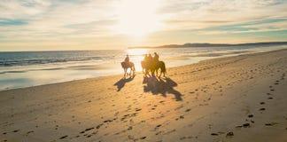 Всадники лошади задние на пляже Limantour с заходом солнца стоковое фото rf