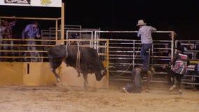 Всадник быка ехать его бык видеоматериал