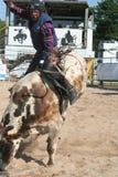 всадник 2 быков Стоковые Изображения RF
