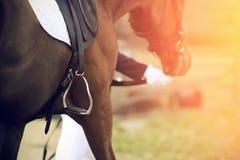Всадник водит уздечкой лошади, которая имеет седловину на своей задней части со стременем стоковая фотография