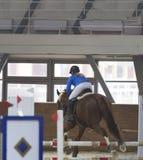 Всадник выполняя скачку на лошади залива над барьером стоковое фото