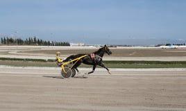 Всадник гонки проводки лошади Стоковое Изображение