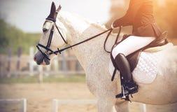 Всадник ехать белая лошадь выполняет на конкуренциях dressage стоковые изображения rf