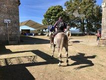 Всадник лошади во время праздненства Сан Breixo в Barro Галиции Испании стоковое изображение rf