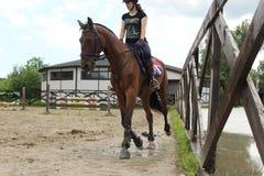 всадник лошади, состязание стоковое изображение