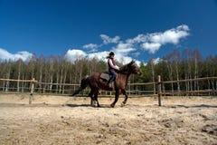 всадник лошади Стоковое Изображение