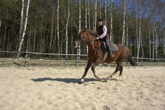 всадник лошади Стоковая Фотография RF
