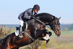 Всадник на лошади залива в скача выставке Стоковая Фотография