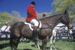 Всадник на horseback наблюдающ полем steeplechase, Стоковое Изображение RF