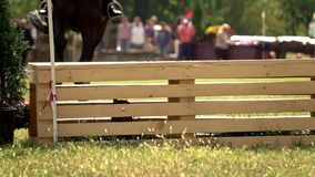 Всадник при лошадь, скача барьер сток-видео