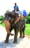 всадник слона Стоковые Фото