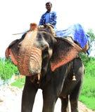 всадник слона Стоковая Фотография