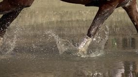 Всадник с водой скрещивания лошади сток-видео