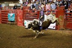Всадник Bull Стоковые Фото
