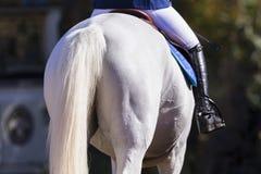 Всадник кабеля лошади холя Стоковое фото RF