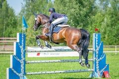Всадник на лошади шлямбура выставки залива преодолевает высокие препятствия в арене для выставки скача на небо предпосылки голубо Стоковое фото RF