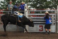 Всадник родео на черном быке Стоковое Изображение RF