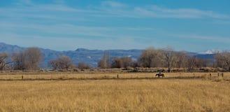 Всадник спины лошади на проселочной дороге Стоковое Изображение RF