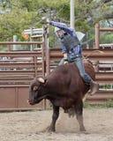 Всадник Bull Стоковая Фотография RF