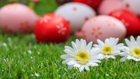 2 всех пасхального яйца принципиальной схемы цыпленока ведра цветут детеныши покрашенные травой помещенные Белые маргаритки на зе Стоковая Фотография RF