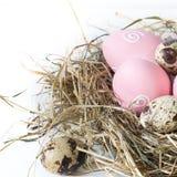 2 всех пасхального яйца принципиальной схемы цыпленока ведра цветут детеныши покрашенные травой помещенные Гнездо сена с покрашен Стоковая Фотография