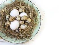 2 всех пасхального яйца принципиальной схемы цыпленока ведра цветут детеныши покрашенные травой помещенные Гнездо сена с белыми я Стоковая Фотография RF