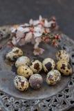 2 всех пасхального яйца принципиальной схемы цыпленока ведра цветут детеныши покрашенные травой помещенные Яичка триперсток на де Стоковое Изображение