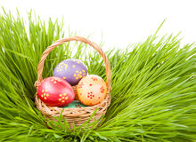 2 всех пасхального яйца принципиальной схемы цыпленока ведра цветут детеныши покрашенные травой помещенные Яичка в корзине в трав Стоковое Изображение RF