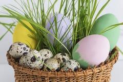 2 всех пасхального яйца принципиальной схемы цыпленока ведра цветут детеныши покрашенные травой помещенные Стоковая Фотография