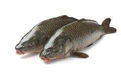 2 всех рыбы вырезуба Стоковая Фотография RF