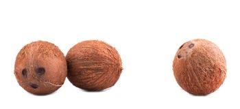 3 всех, свежих и коричневых кокоса, изолированного на белой предпосылке Гаваиские кокосы Тропические и экзотические кокосы Стоковое фото RF